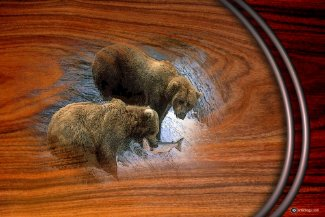 GRIZZLEY BEARS poster