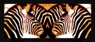 Zebras in love  poster