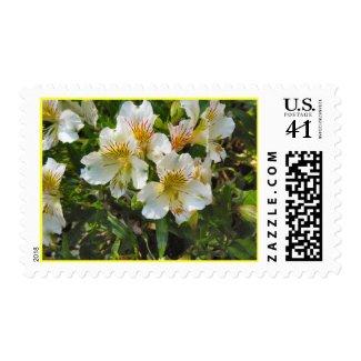 alstroemeria pretty flowers stamp