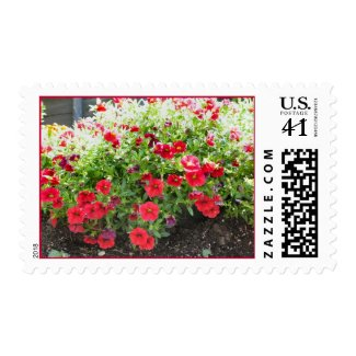 red flowers in the sun stamp
