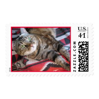 cinnamon the cat on red stamp