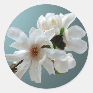 Magnolia Stellata Envelope Seal Sticker sticker