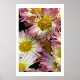 Flower Surfing print