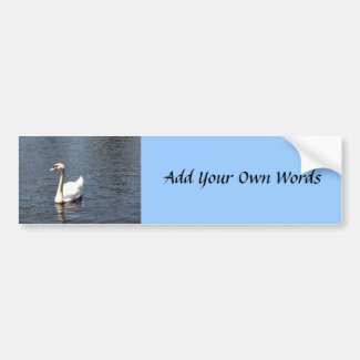 Swan in Lake bumpersticker