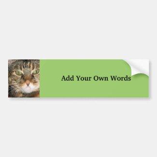 Cat photograph bumpersticker
