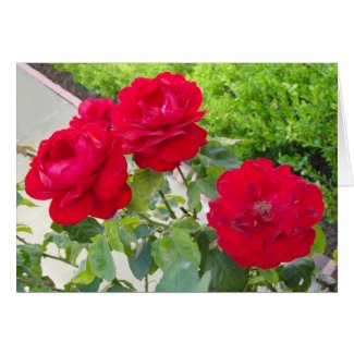 Red Roses card