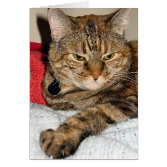Cinnamon the Cat card