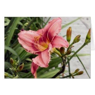 Flower on the Sidewalk card