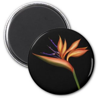 Bird Of Paradise Magnet magnet