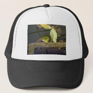 Watching frog cap
