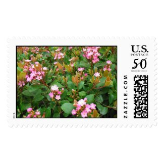 Pink flowers, Green leaves Postage Stamp