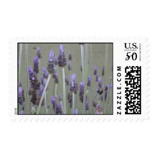 Lavender stamp