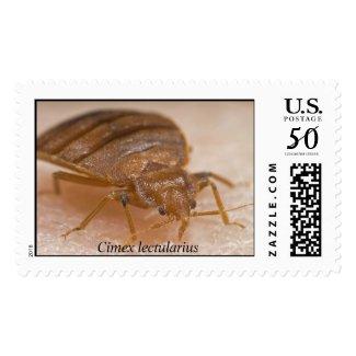 Cimex lectularius stamp