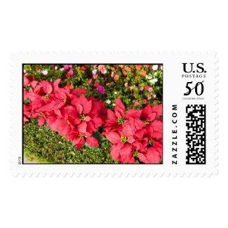 Poinsettia Garden postage