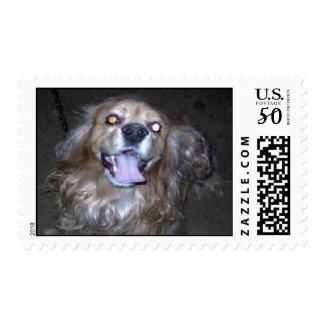 Buddy the Cocker Spaniel stamp