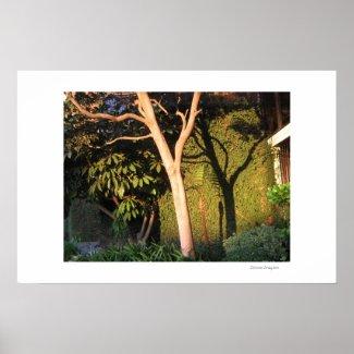 Shadow & Tree print