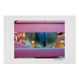 Horse and a Pink Fence print
